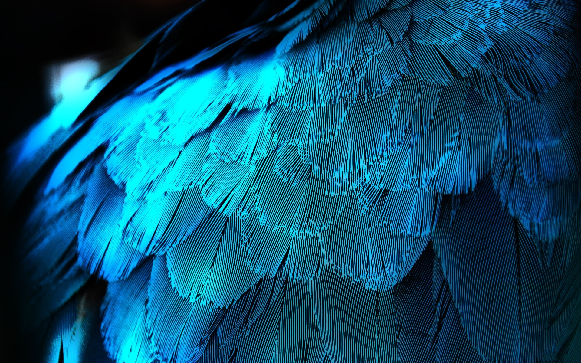 Download Desktop Wallpaper Peacock Feathers With Blue Light