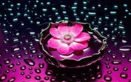 flower on the wet glass