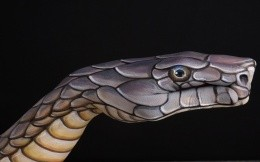 Snake on a black background