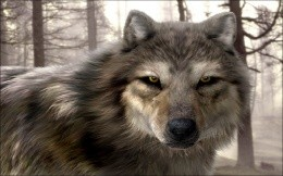 to live with wolves on wolf howl