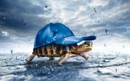 Turtle in the rain cap