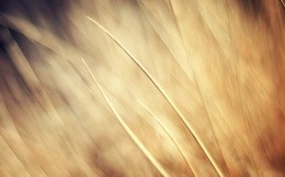 Beige abstraction on wheat field.