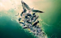 Birds, birds, gulls, animals, futuristic painting - mixed flock of birds - background for your desktop