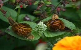 A family of snails