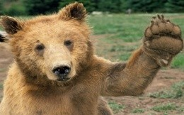 Bearish greet