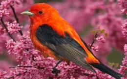 Beautiful bright bird