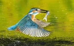 Bird with a fish in its beak