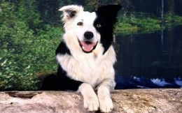 Black and white dog with round eyes