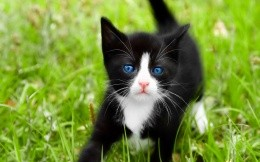 Black and white kitten on bright green grass