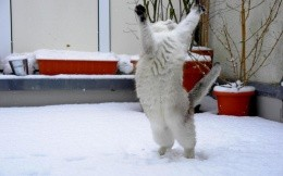 Cat catches the snow
