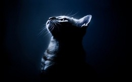 cat in a dark blue