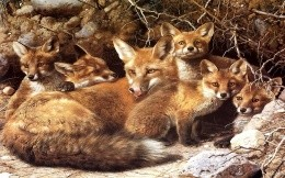 fox with her babies