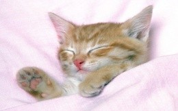 Ginger kitten under a blanket