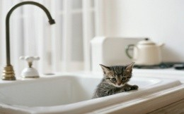 Kitten in the kitchen sink, wallpaper, kittens, animals.