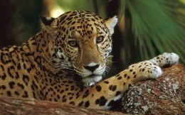Leopard close-up photo