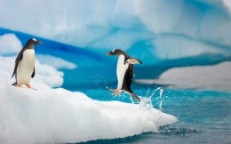 Penguin jumps out of water