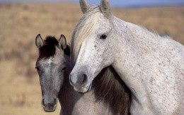Photo of two horses close-up
