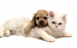 Puppy and white fluffy kitten