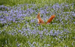 Squirrel in a meadow of flowers