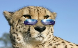 Steep cheetah