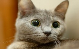 Surprised kitten with large round eyes, wallpaper, animals, kitten, kittens.