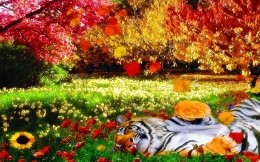 tiger on nature
