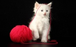 White kitten and red ball
