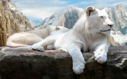 white lion on a background of mountains, computer wallpaper