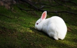 White rabbit in the woods, high-quality photos.