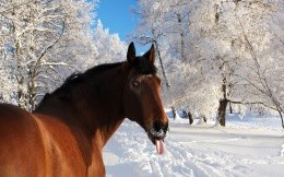 Winter horse language