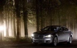 Jaguar CP photo in night forest