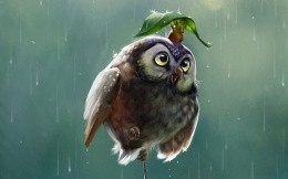 Owl and a mouse hiding from the rain