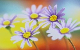 Beautiful flowers and colors of spring, wallpaper with flowers