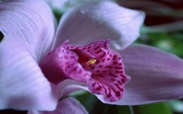 Orchid for Nuts