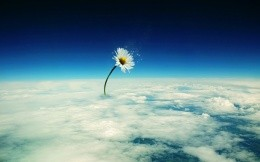 Photograph collage giant daisy above the clouds