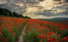 Poppy Field gloomy clouds footpath