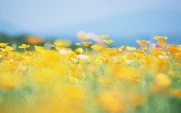 Summer meadow with yellow flowers photo wallpaper