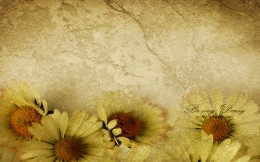 Veta with yellow petals - wallpaper