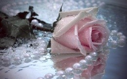 white pearls and a rose