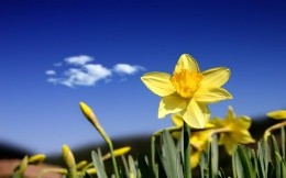 Yellow flowers on a background of blue sky wallpaper