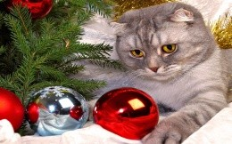 cat and Christmas balls