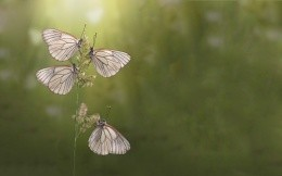 4 butterfly on a blade of grass