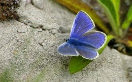 Blue butterfly - the image on your desktop
