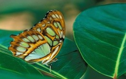 Bright butterfly on green leaves