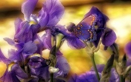 Butterfly camouflaged among the flowers
