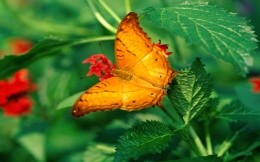 Butterfly in the grass, a cool photo on your desktop