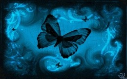 Butterfly nights