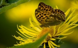 Butterfly on a bright yellow flower