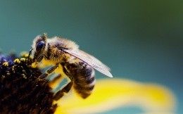 Hard worker-bee on a flower