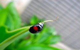 Ladybug, grass, green - the image on your desktop
